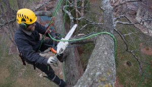 tree surgeon in Coill Dubh working all day long
