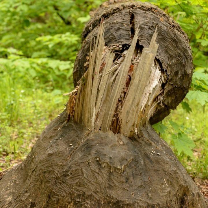tree felling dublin ie